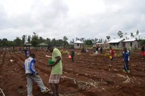 27. März 2015. Die Häuser sind fertig. Erste Anpflanzung- und Säenaktion.